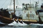 peche-baleines_492.jpg