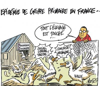 grippe-aviaire-primaires-mutio.jpg